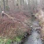 Enlèvement des branches
